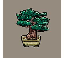 shrub bonsai Photographic Print