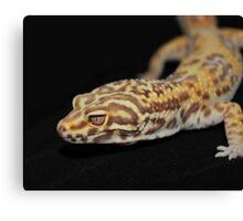 Albino Leopard Gecko Canvas Print