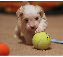 Jagger with Tennis Ball Photographic Print