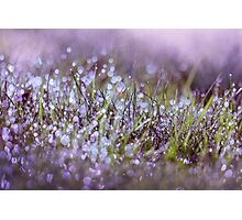Morning dew on grass Photographic Print