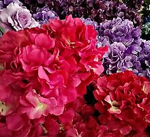 Vibrant Colored Hydrangeas by Jane Neill-Hancock