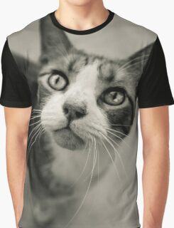 Gray Cat was in love with me; California Sidewalk Graphic T-Shirt