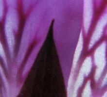 Pelargonium petals closeup Sticker