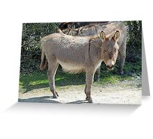 New Forest donkey Greeting Card