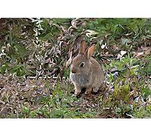 Baby Rabbit digitally altered. Photographic Print