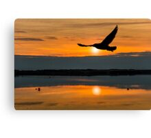 Gull on her travels Canvas Print