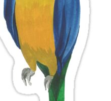 Summer watercolor beautiful tropical parrot Sticker