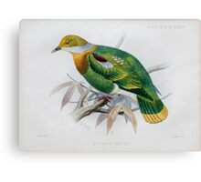 Illustration of Eastern Ornate Fruit-dove  Canvas Print