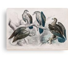 1866 Goldsmith eagle birds print No.2  Canvas Print