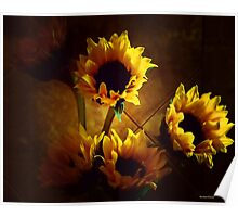 Sunflowers in Shadow Poster