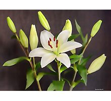 White Lilies in Vase Photographic Print