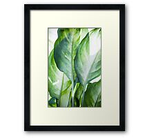 tropic abstract  Framed Print