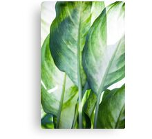 tropic abstract  Canvas Print