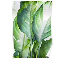 tropic abstract  Poster