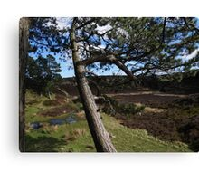 Strong Roots, Ilkley Moor Canvas Print