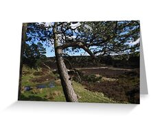 Strong Roots, Ilkley Moor Greeting Card