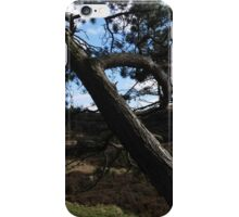 The Wind-whipped Tree, Ilkley Moor iPhone Case/Skin