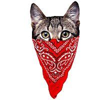 cat bandana Photographic Print