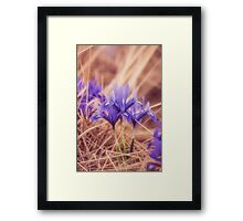 Small Iris Framed Print