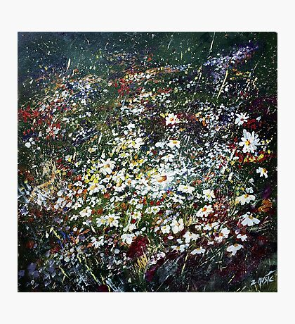 Spring Daisy Flowers in Field  Photographic Print