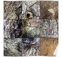 Swatches of Rock and Bark Poster