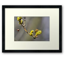 Gathering pollen Framed Print
