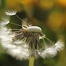Dandelion Days by Tracy Friesen