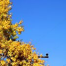 Yellow Autumn Tree by Henrik Lehnerer