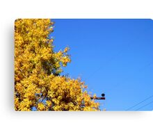 Yellow Autumn Tree Canvas Print