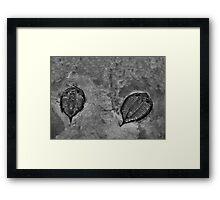 BW17 Framed Print