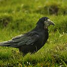 Rook in the Grass by Jane-in-Colour