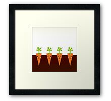 Sweet Carrots growing in dark Soil Framed Print