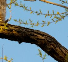 Great Horned Owlets Perched In A Tree Sticker