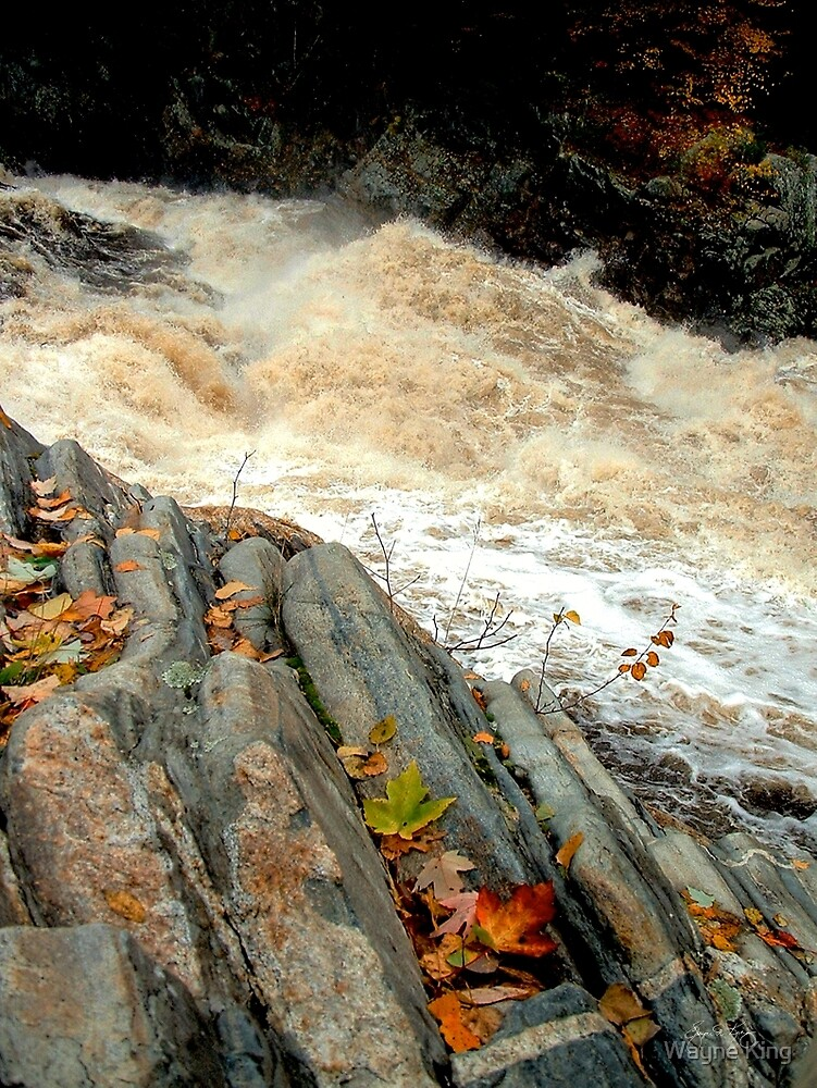 Livermore Leaves at High Water by Wayne King