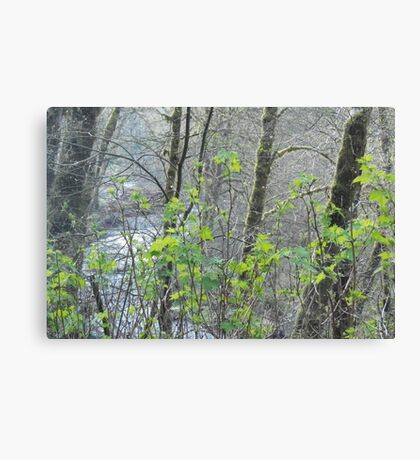 Earth Forest Canvas Print