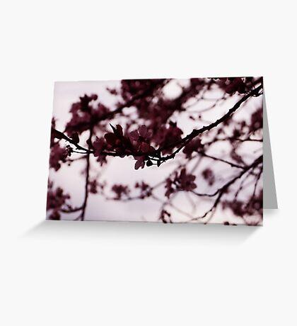 Japanese Cherry Tree Greeting Card