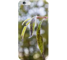 Frost on the willow tree iPhone Case/Skin