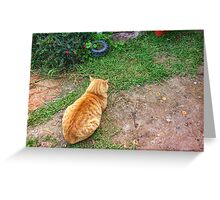 When your cat is angry with you. Greeting Card