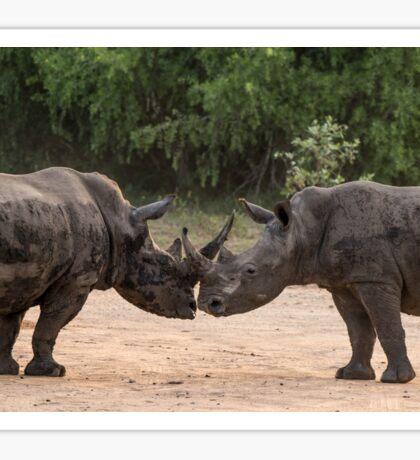 Kissing Rhinos Sticker