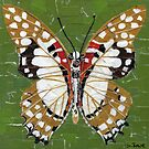 Paper Butterfly - Angola White Lady by Shawna Rowe