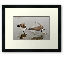 Canada Goose chase Framed Print