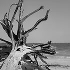 Toppled Tree by Bill Wetmore