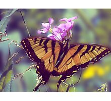 Yellow Swallow Tail Butterfly Photographic Print