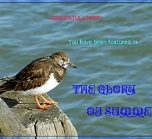 The Glory Of Summer Feature Banner by BlueMoonRose