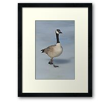Canada Goose walking on ice Framed Print
