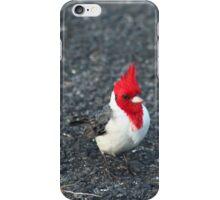 Red Cardinal II iPhone Case/Skin