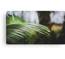 Palm Tree 4 Canvas Print