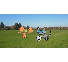 Two Cats Waiting To Play Photographic Print
