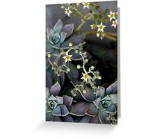 Twinkle, Twinkle, Succulent Stars Greeting Card