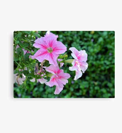 Pink flowers macro, natural background. Canvas Print